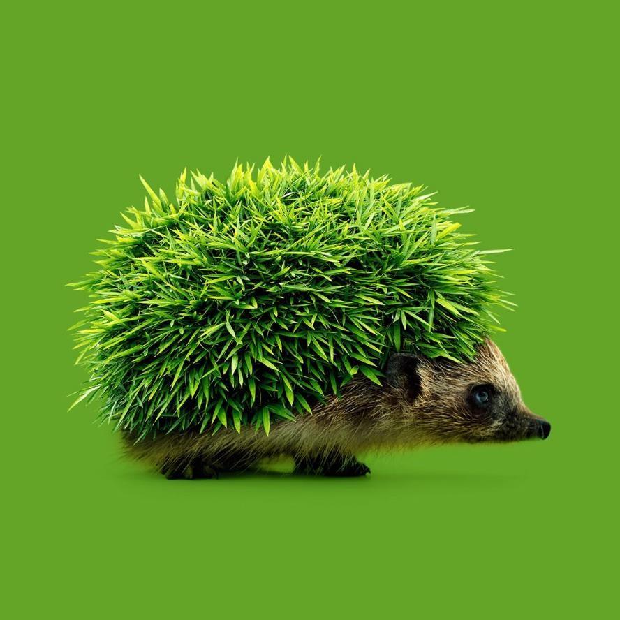 Verde. Significado de los colores