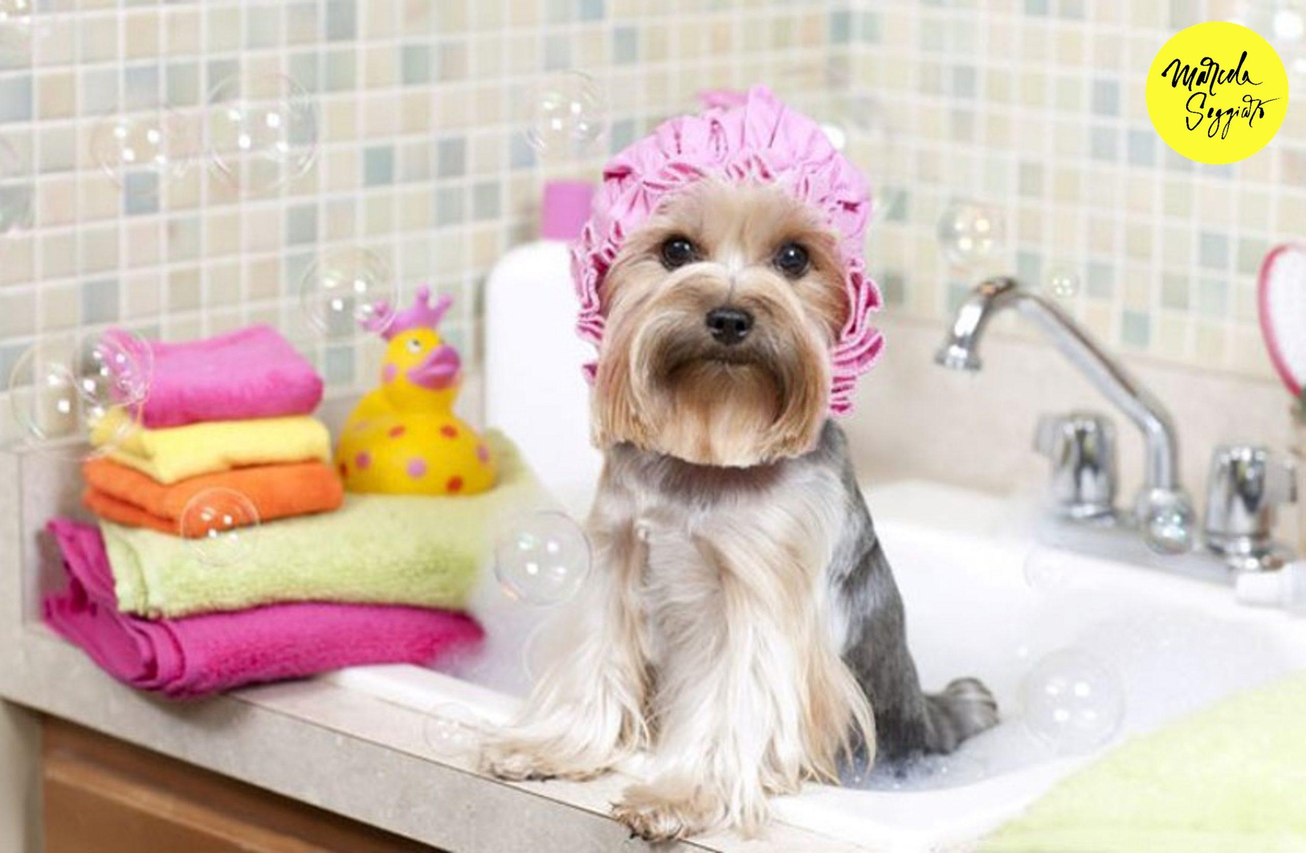 Trends Productos y Servicios Pet Friendly. Marcela Seggiaro