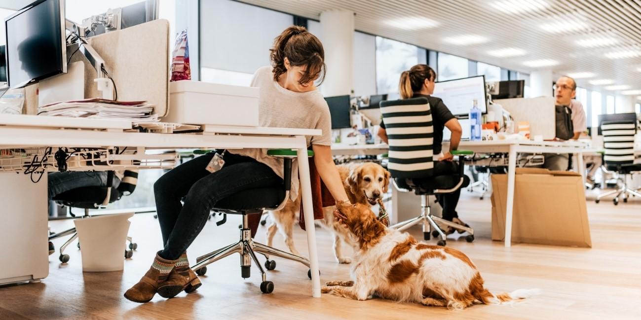 Tendencia Pet Friendly: ¡Love for pets! Marcela Seggiaro